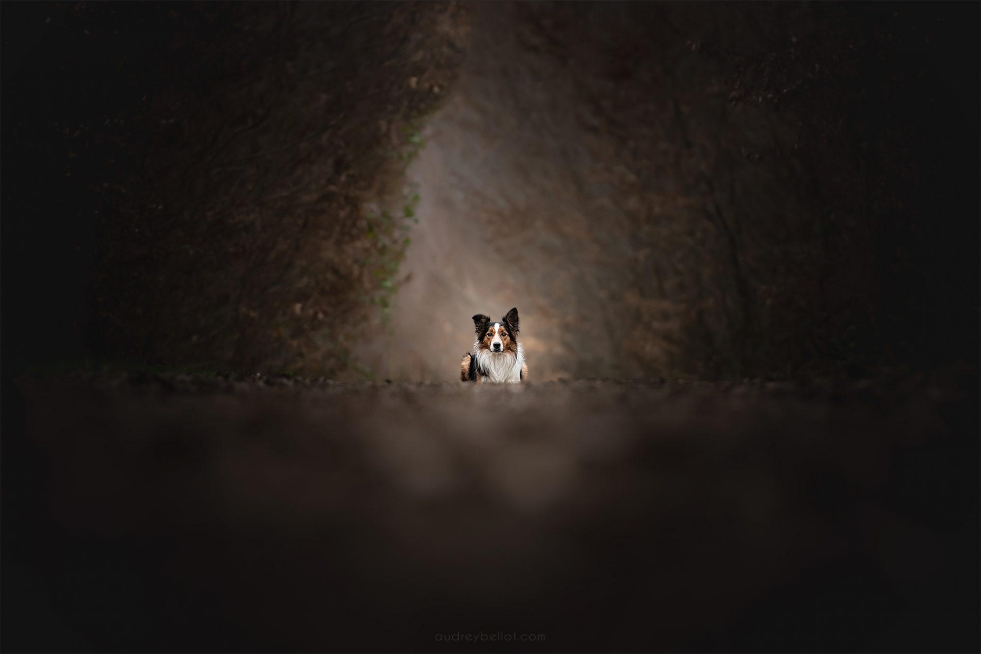 apprendre la photographie canine