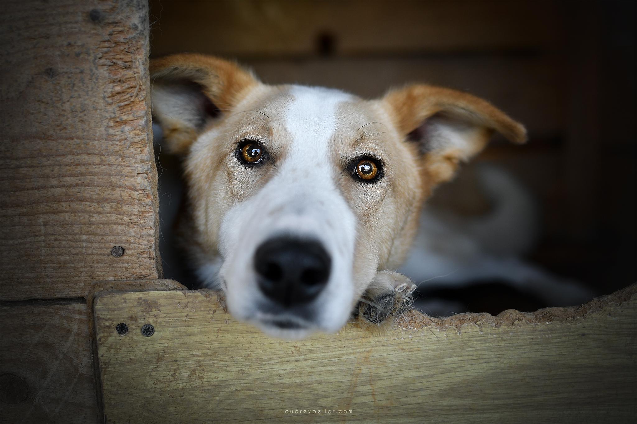 chien roumanie remember me association aide chiens roumains photographe animalière bénévole