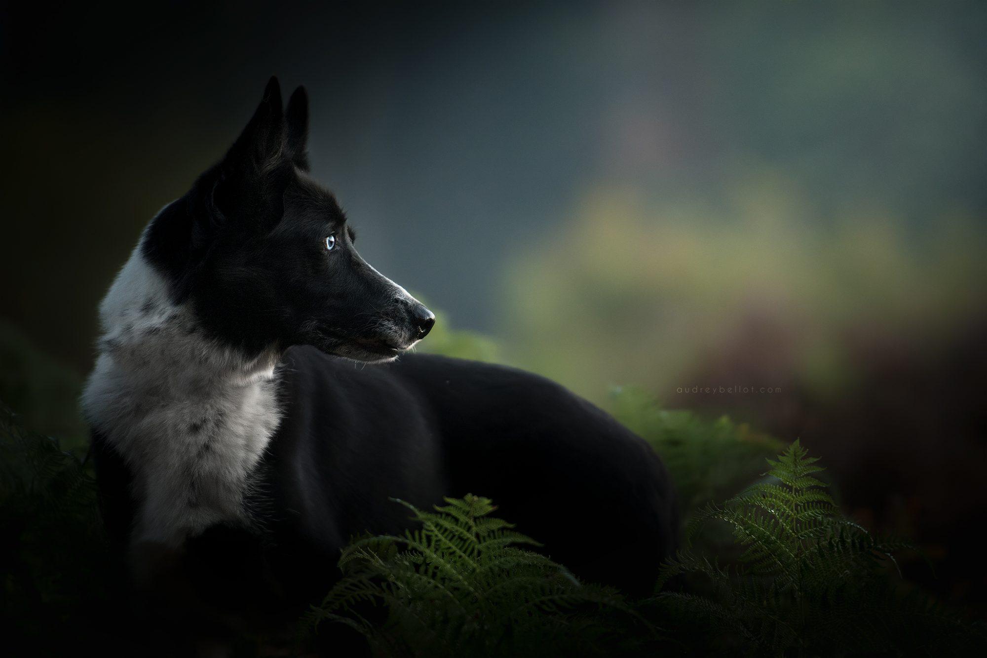 formation photographe canin