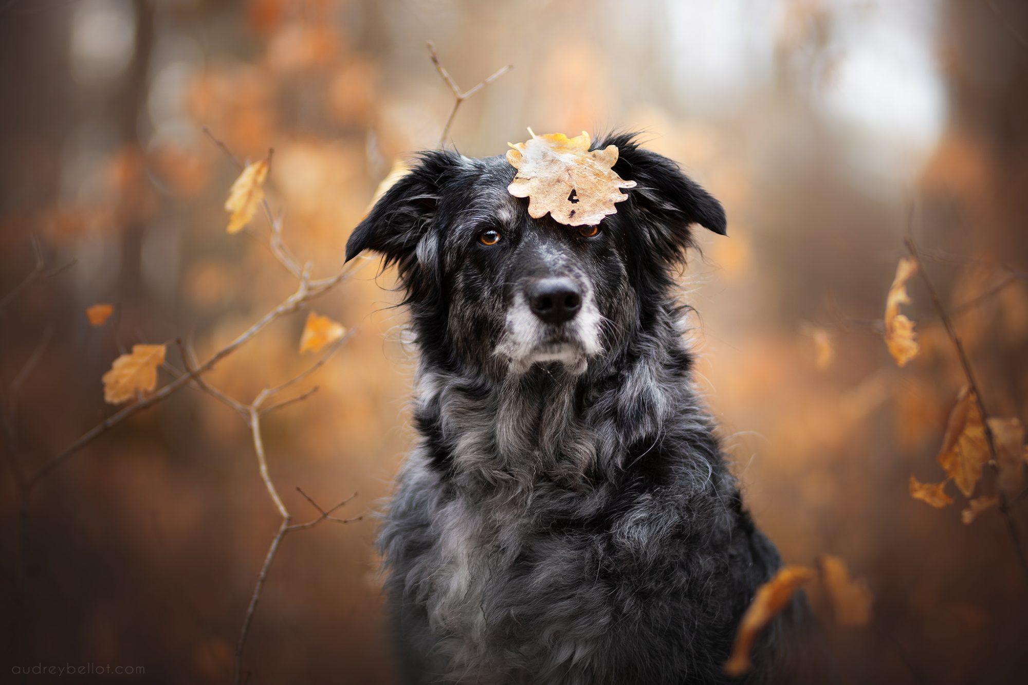 workshop photographie canin france belgique audrey bellot photographe canin professionnel stage photo chiens