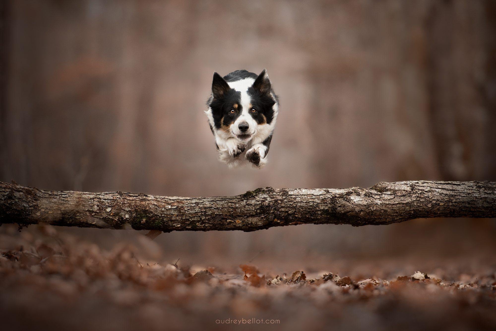 audrey bellot photographe canin professionnel apprendre photo chien workshop photographie canine bretagne