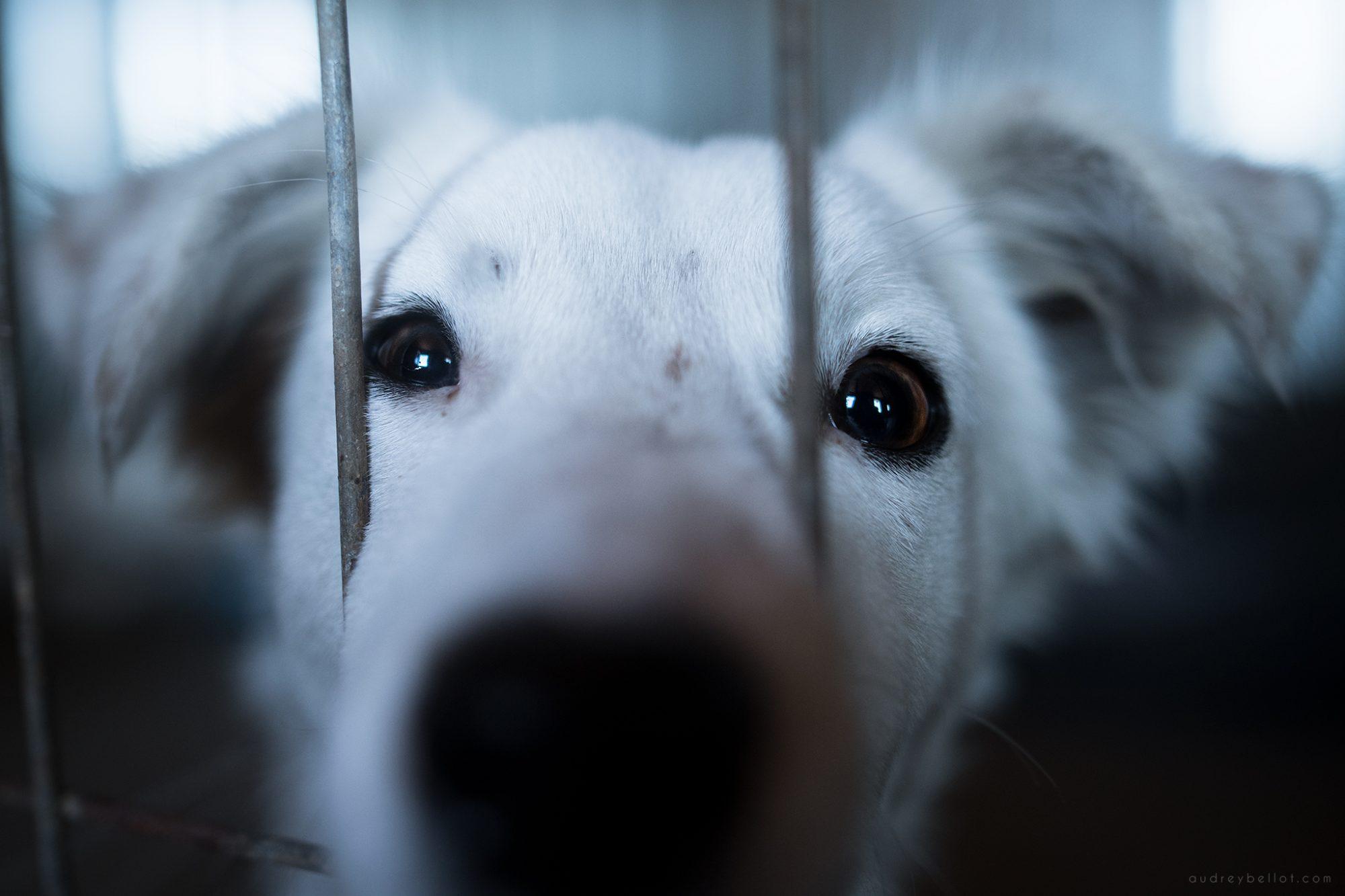 Photographe bénévolat refuge chiens roumanie