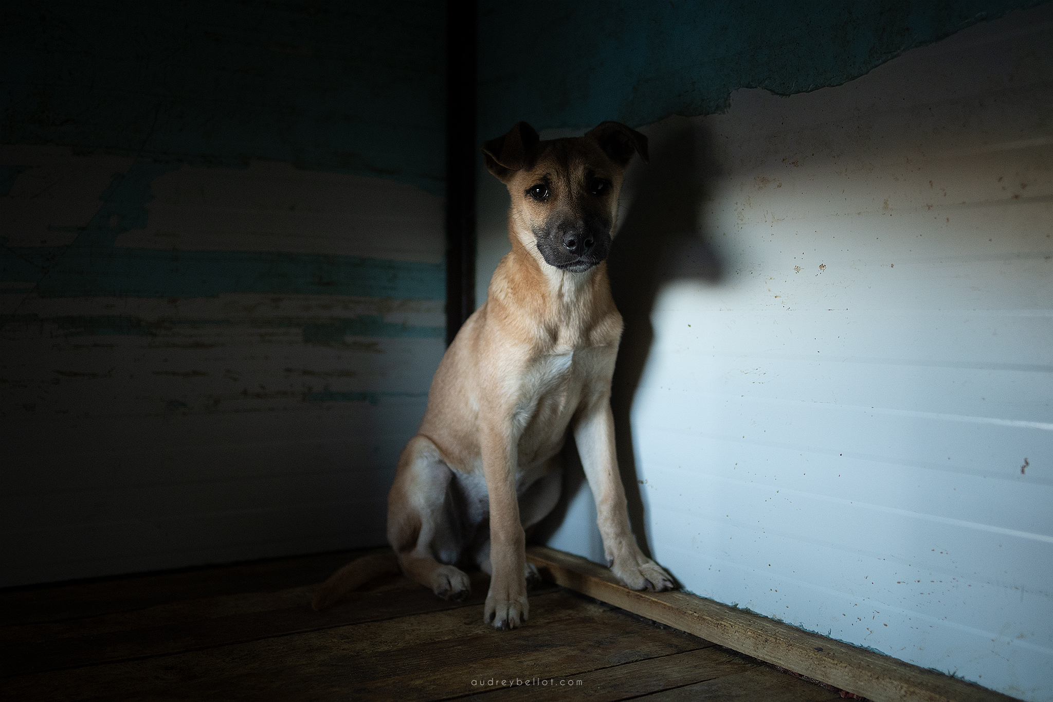 Romanian dog shelter dog photographer abandonned dogs