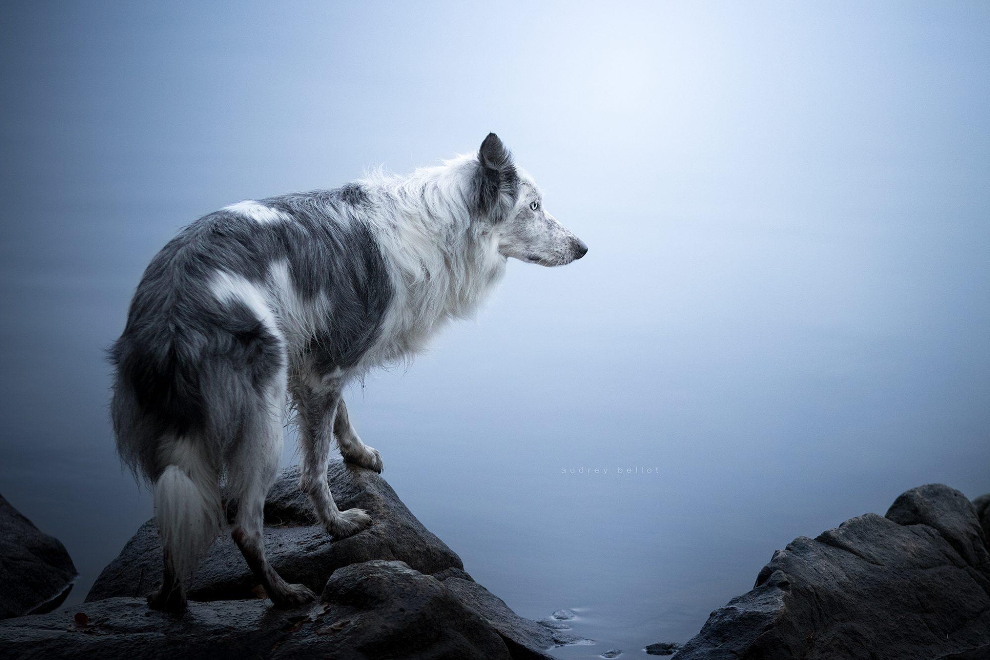 apprendre la photographie de chiens en belgique