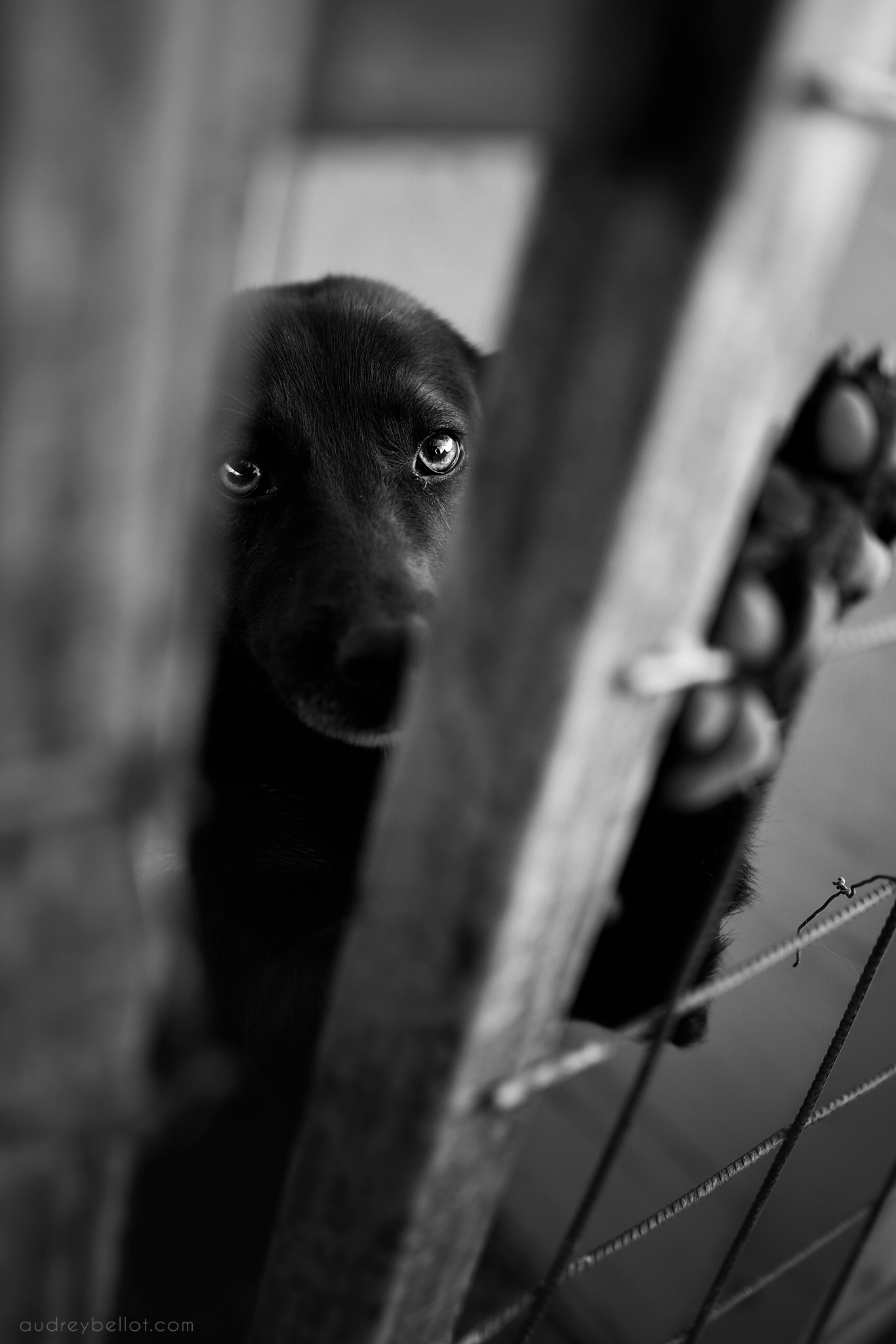 Audrey Bellot Photographer Romanian dog shelter dog photographer abandonned dogs