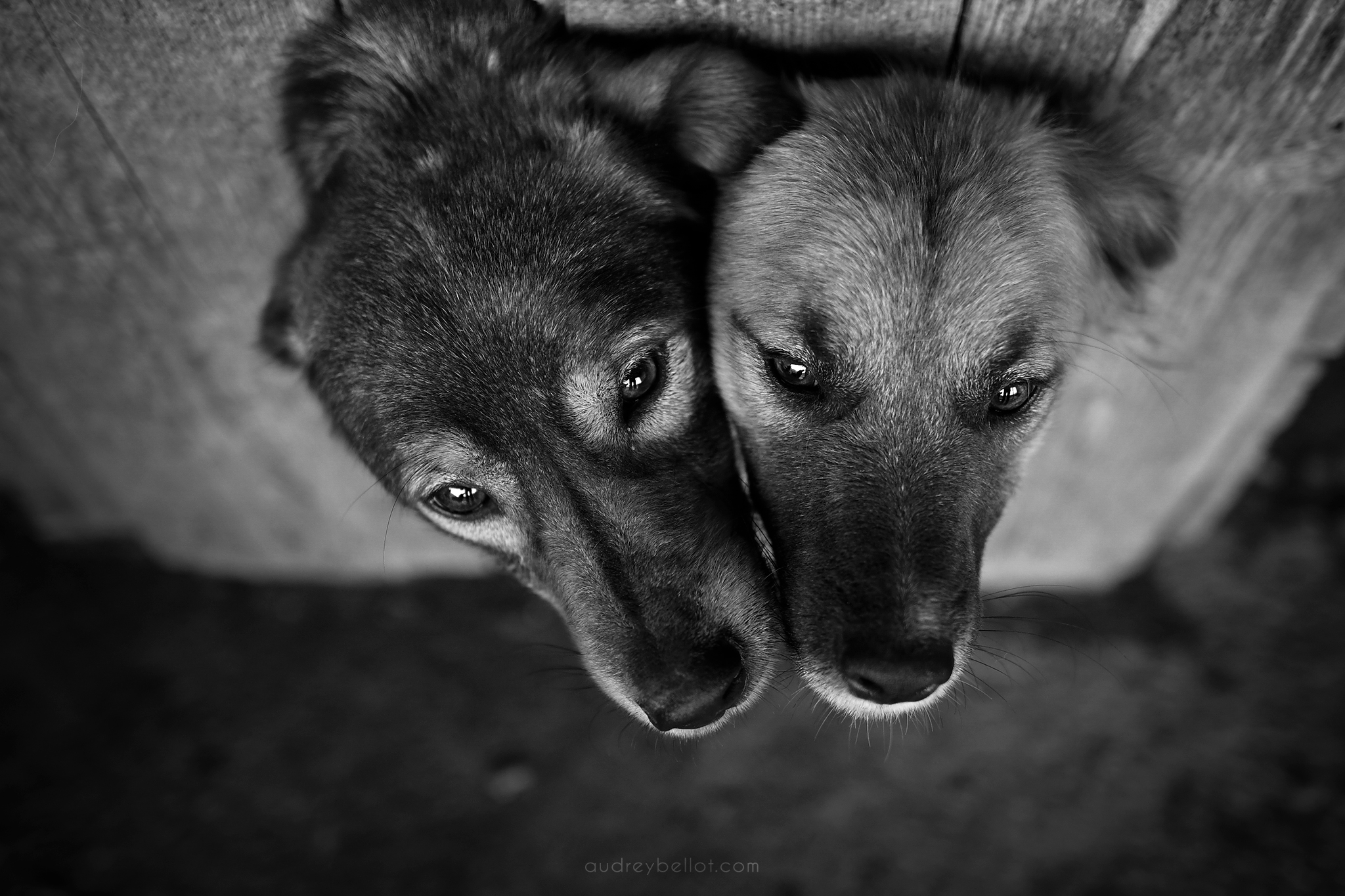 Audrey Bellot Photographer Romanian dog shelter dog photographer abandonned dogs  Remember Me