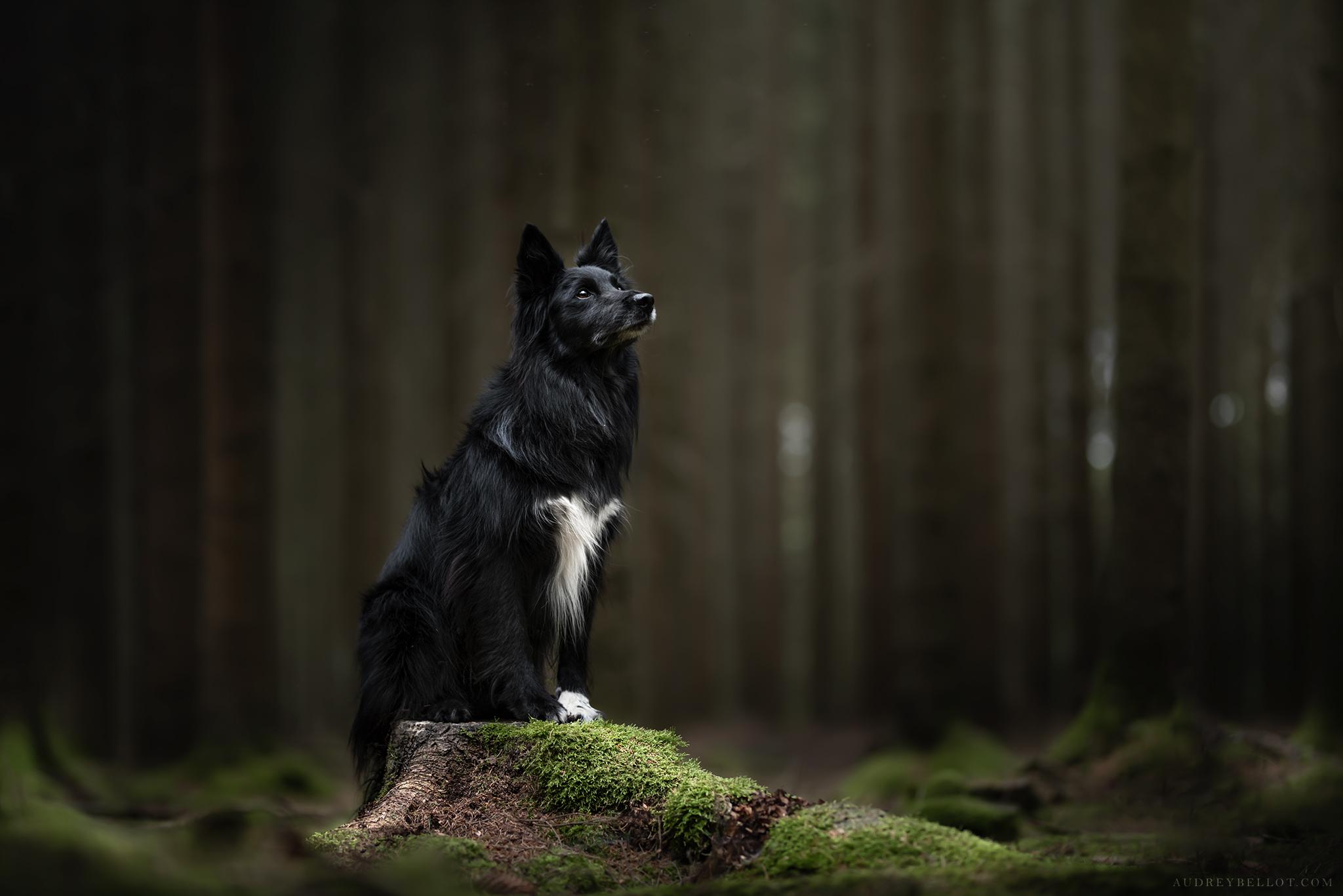Shootings photos et workshops pour photographes canins