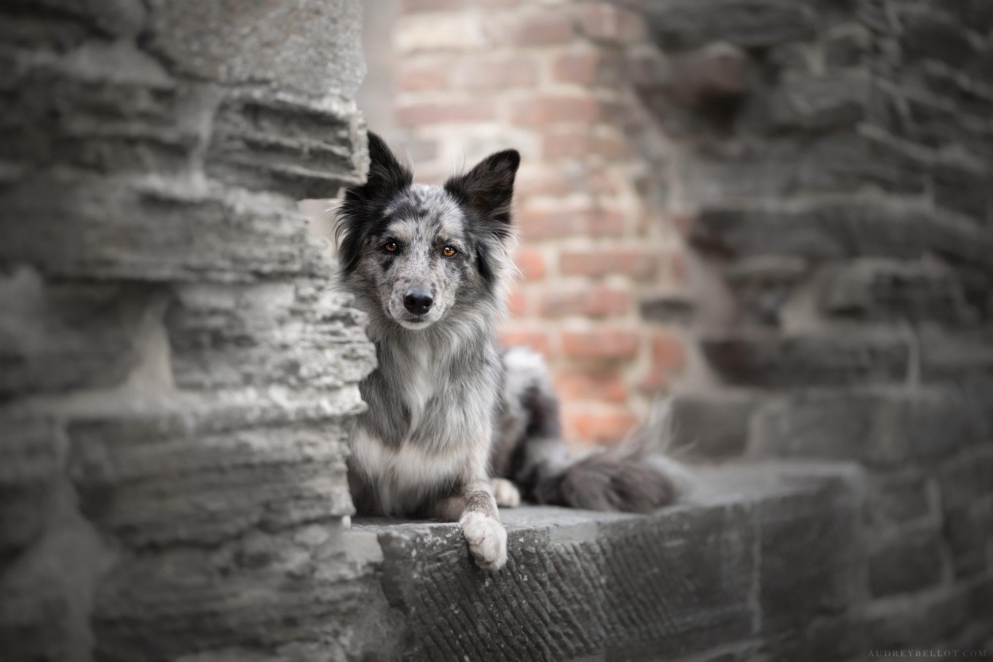 Audrey Bellot Photographe canin montluçon auvergne allier séances photos chiens