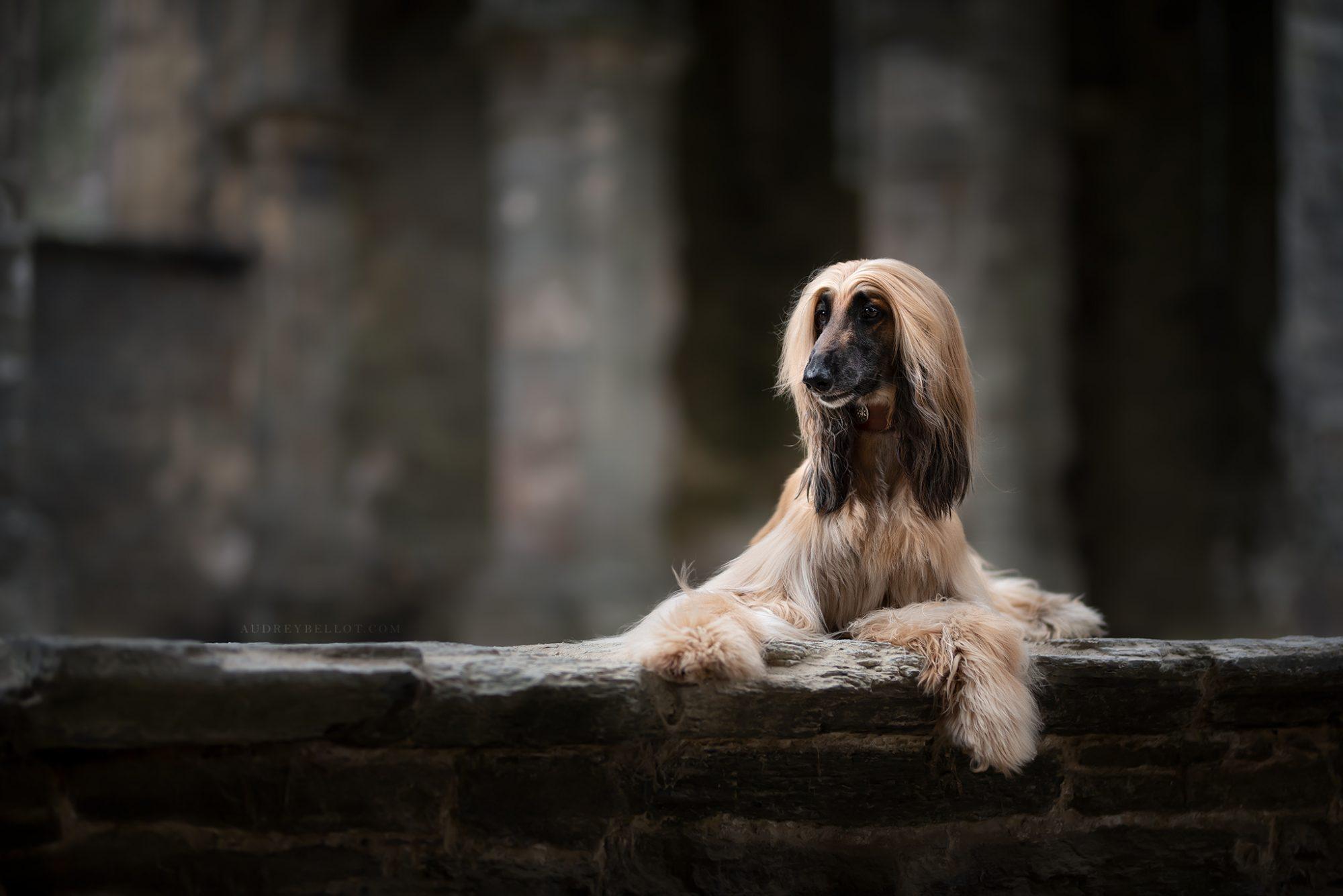 séance photos chiens photographe canin professionnel photographie canin Auvergne France Allier Puy de Dôme Workshop Stage Photo Chien