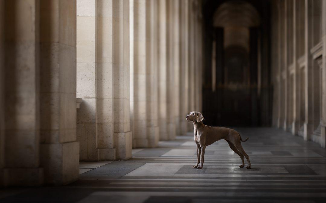 Workshop de photographie canine