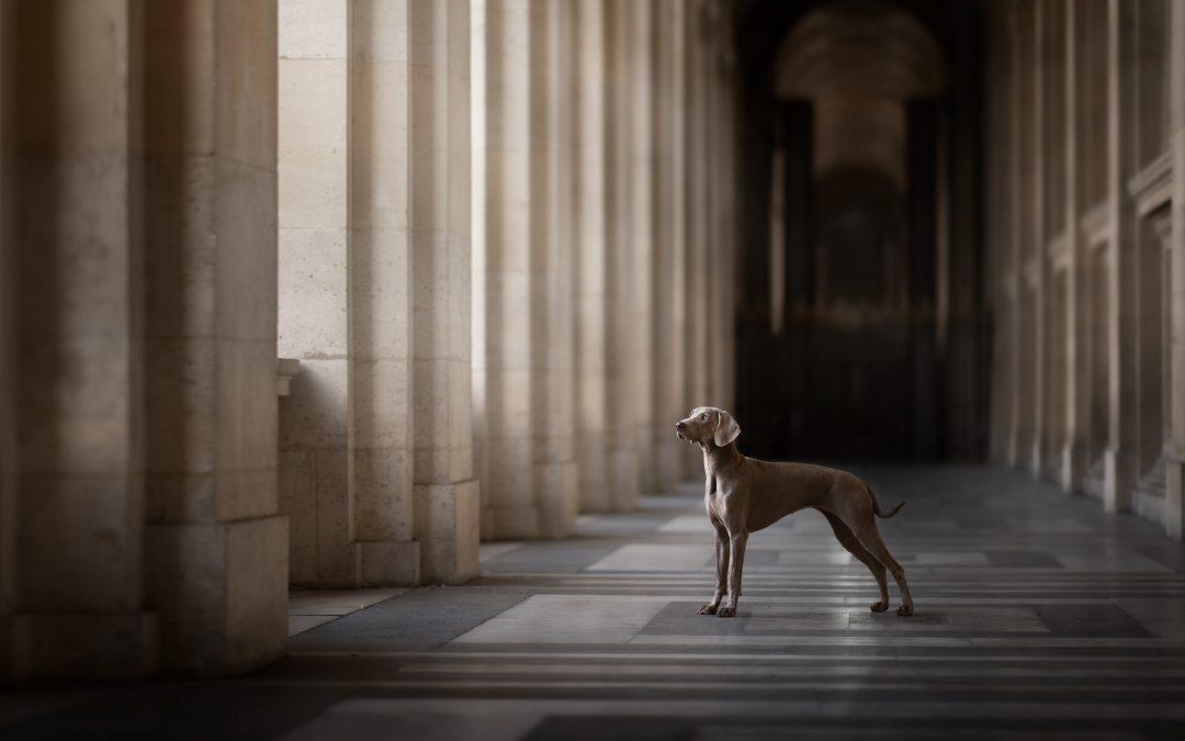 Workshop de photographie canine
