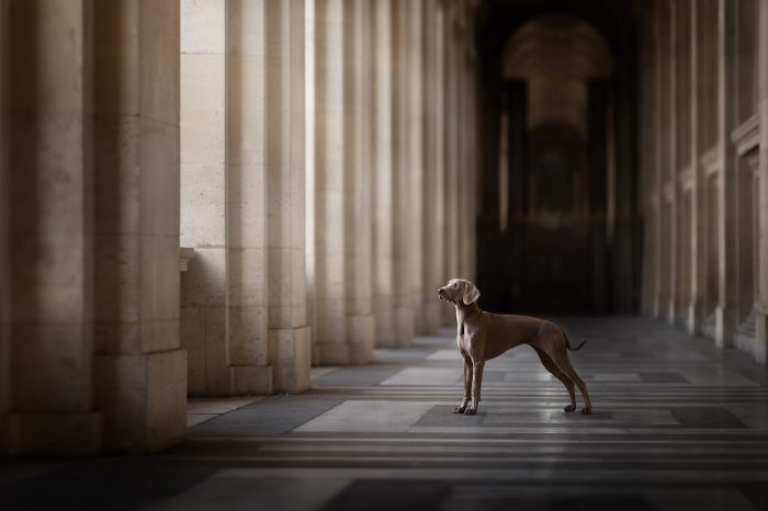 Workshop Photographie Canine avec Audrey Bellot