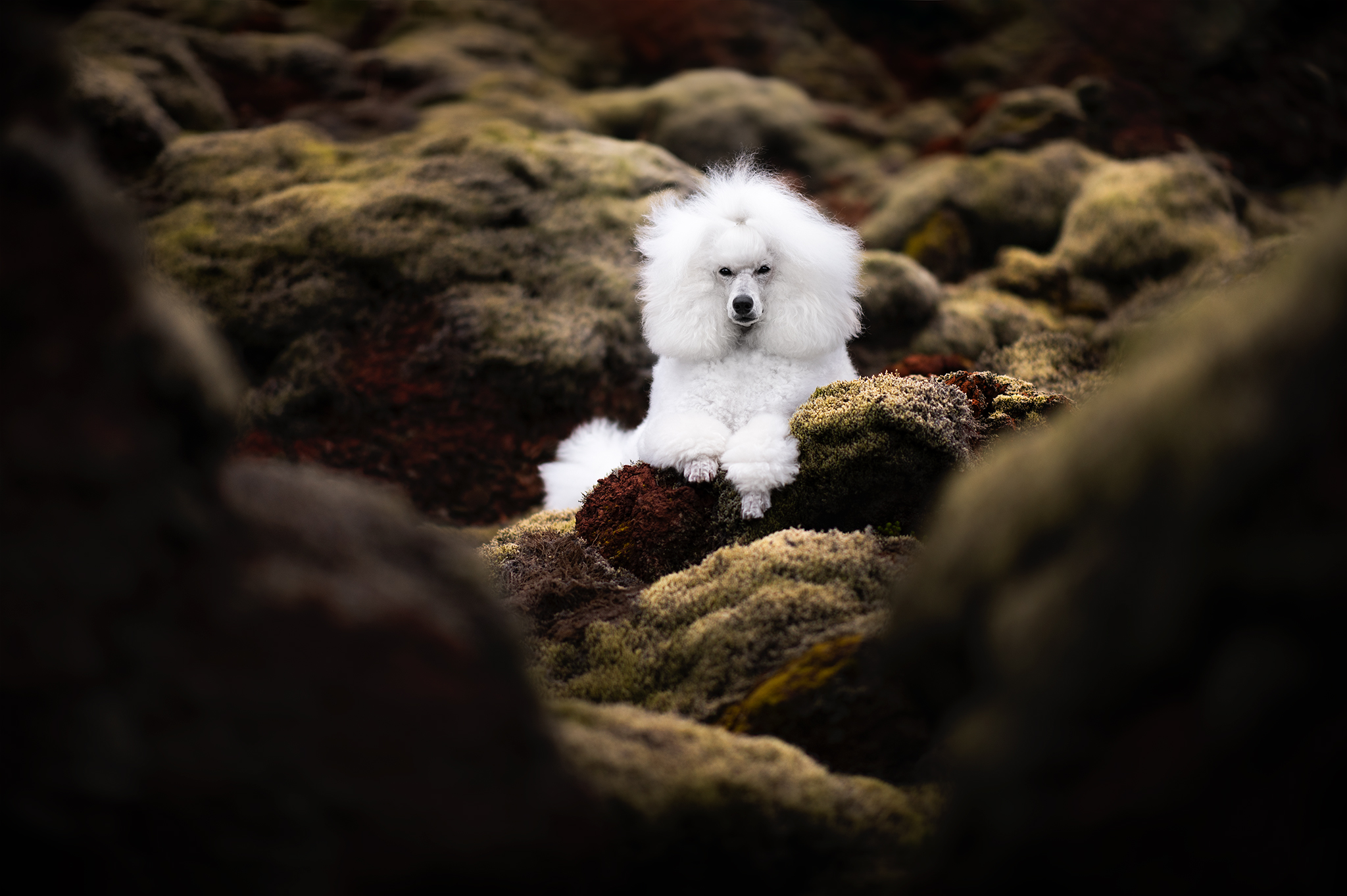 Audrey Bellot Dog Photography Workshop Portraits of Dogs and Art