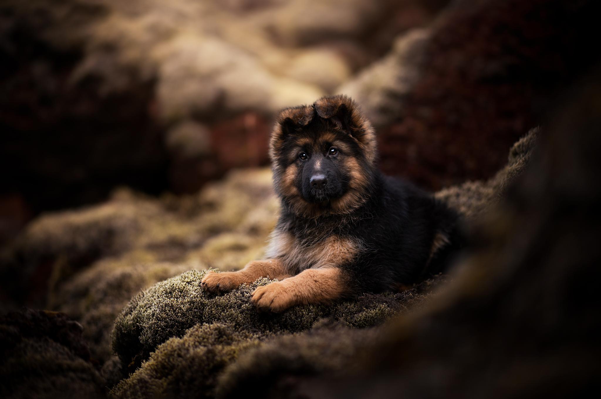 Photographie Canine Portraits de chien France Belgique