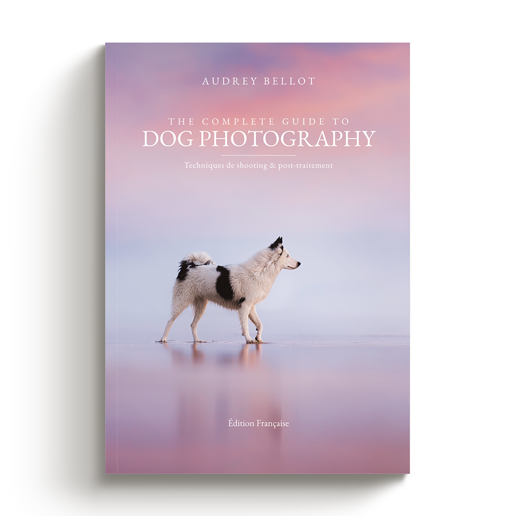 Guide photographie canine