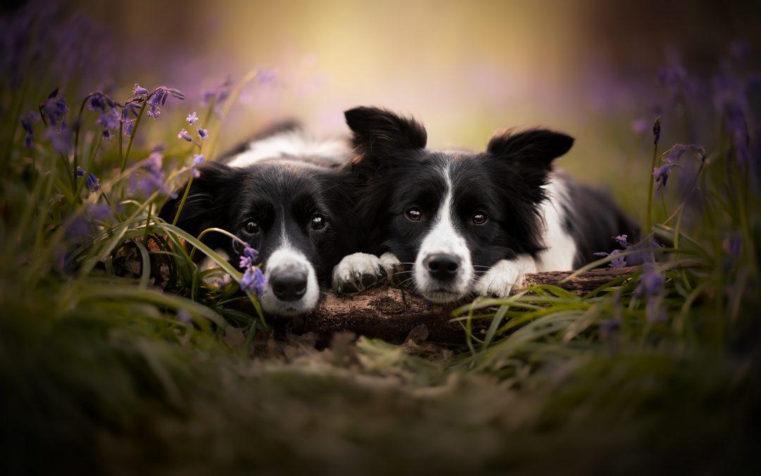 Dog photo sessions in Belgium