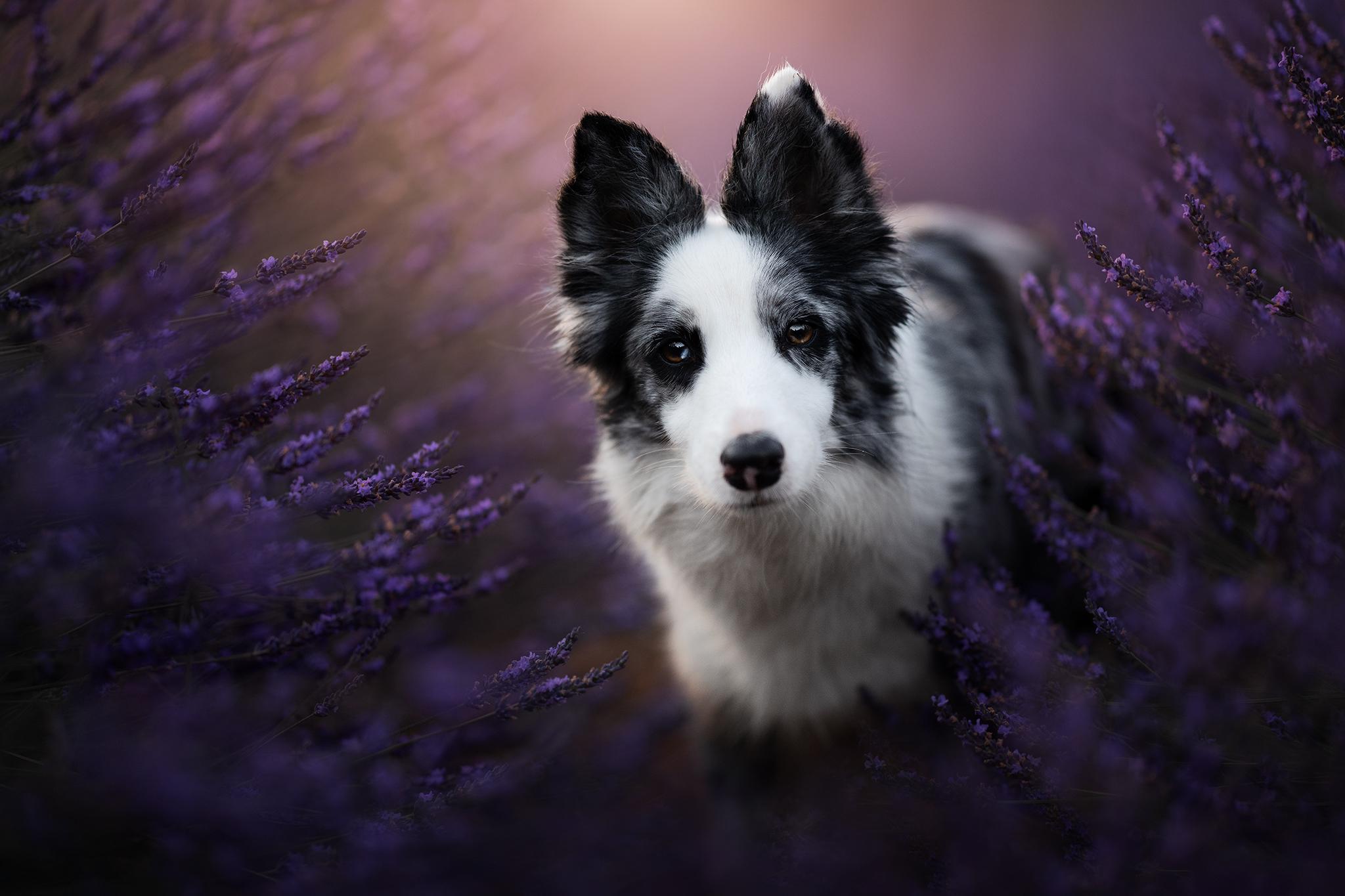 Audrey Bellot Photographe Canin France Belgique Dog Photography Workshop Portraits of Dogs and Art