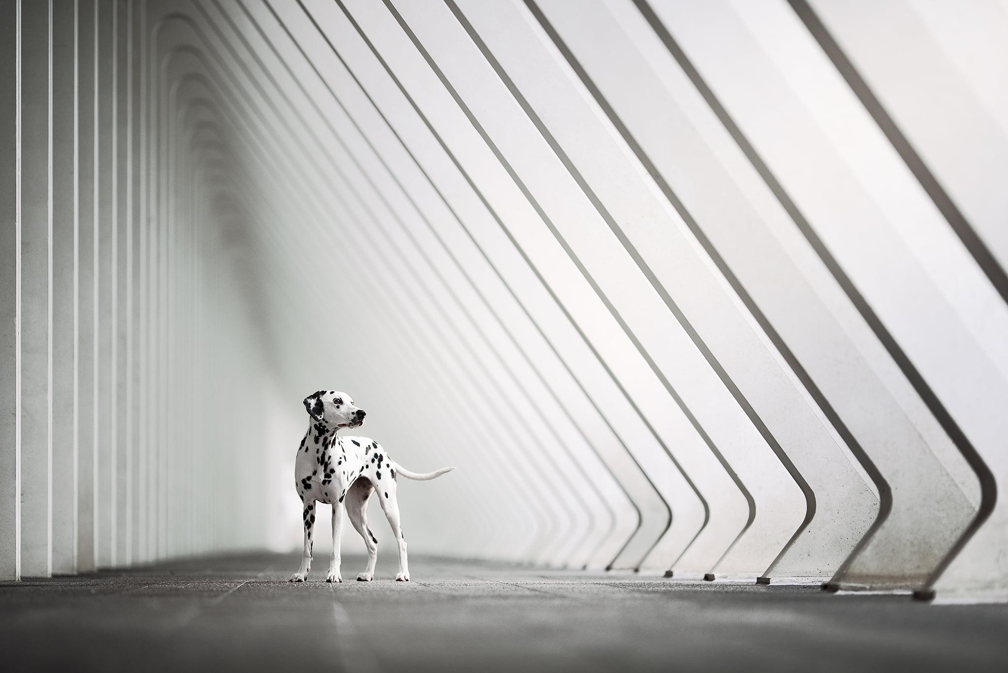 Workshop Photographie Canine avec Audrey Bellot