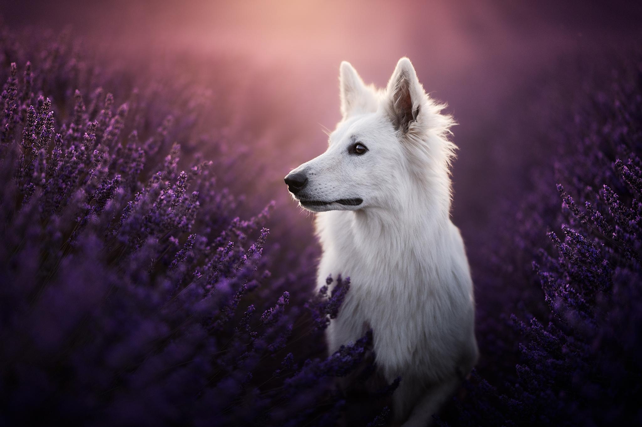 Séance photo Chien Photographe Canin France